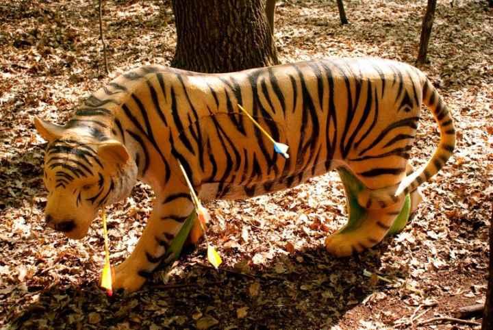 Terč tygr